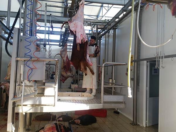 Installazione-macchinari-lavorazione-carne-bovina