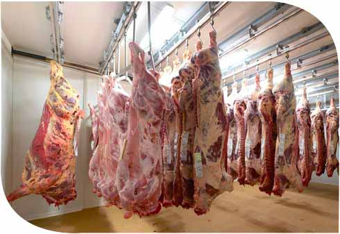 Linee-di-macellazione-bovini